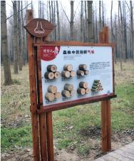 森林疗养系统
